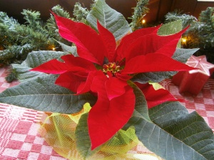 my Alexandrian flower