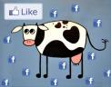 mad cowz on facebook