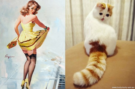 cats posing like pin up girls