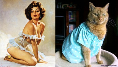 cats posing like pin up girls